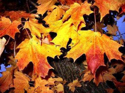 Autumn_in_Rain_in_Wicsonsin_3_6__soul-amp