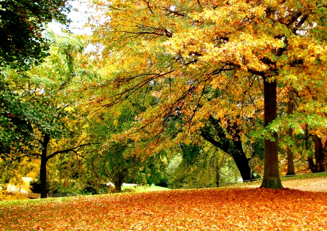 Falling-Leaves-Wallpapers-3